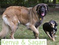 Kenya & Saqan