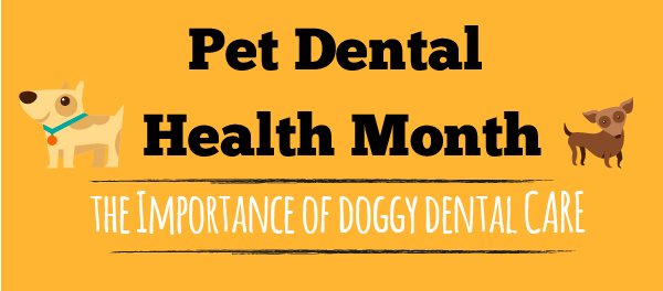 February Newsletter Pet Dental Health Month 2017 Calendar Theme And More