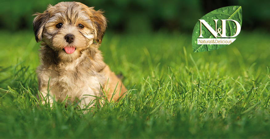 N&D Premium Dog Food available at Total Dog Company