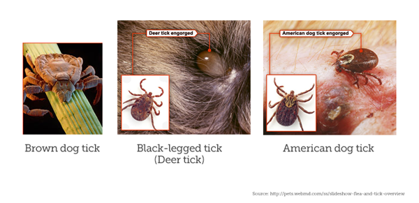 Tick Species and Signs of Ticks
