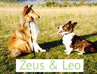 Zeus & Leo