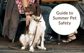 Safety Tips for Your Dog in the Summer and Preventing Heat-related Illness and Injuries